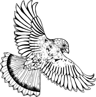 Desenho Preto E Branco De Uma Aguia Passaro Em Voo Laptop