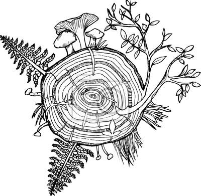 Desenho Preto E Branco Do Conjunto Da Floresta Fern árvore