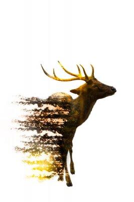 Adesivo Dia Mundial da Vida Selvagem Conceitos Ambientais e da Vida Selvagem