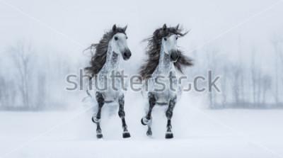 Adesivo Dois cavalos espanhóis do sangue-puro durante o manne fazer através do campo nevado.