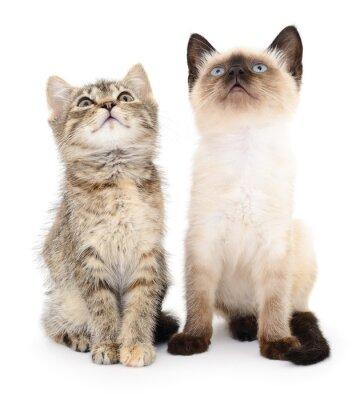 Adesivo Dois, pequeno, gatinhos