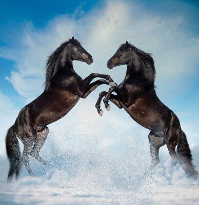 Adesivo Dois, pretas, criados, cavalos, Inverno, fundo