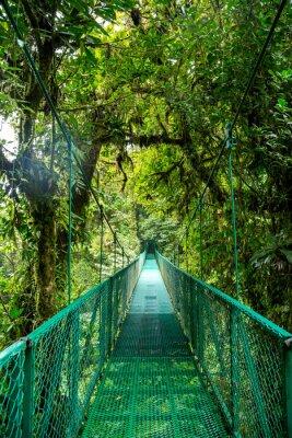 Adesivo Eine Brücke im Regenwald em Costa Rica