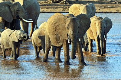 Adesivo Elefante