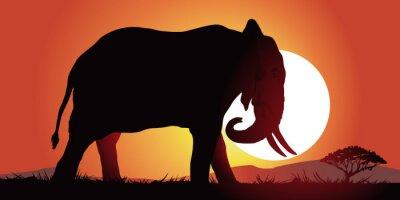 Adesivo Elefante-couche de soleil