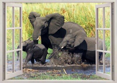 Adesivo Elefantes