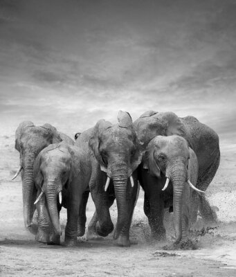 Adesivo Elephant