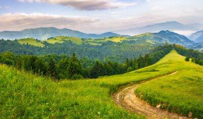 Adesivo Estrada, conifer, floresta, montanhas, amanhecer