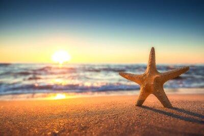 Adesivo Estrela do mar na praia ao nascer do sol