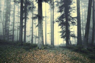 Adesivo Fairytale nevoento bonito da árvore da floresta. Luz de névoa mágica na floresta.