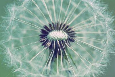 Adesivo Fim, cima, dandelion, abstratos, cor