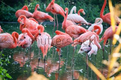 Adesivo flamingo on the pond