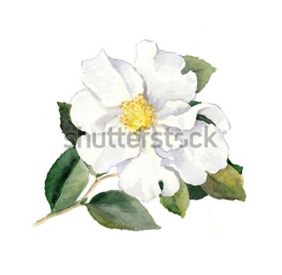 Adesivo Flor branca. Ilustração botânica em aquarela