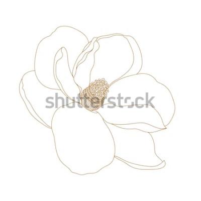 Adesivo Flor da magnólia, vista superior, isolada no branco. Flores tiradas mão da magnólia gráfica. Desenho e esboço da flor de Vector.Magnolia com linha-arte preto e branco.