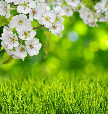 Adesivo Flor da mola e grama
