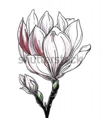 Adesivo Flor tropical da flor da magnólia branca no fundo branco. Entregue a aquarela tirada a ilustração monocromática preto e branco botânica para a cópia do casamento, cartão, convite. Estilo japonês. Retr