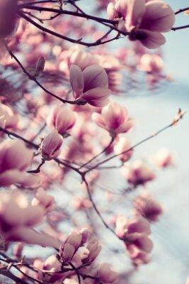 Adesivo Flores cor-de-rosa bonitas da magnólia