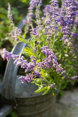 Adesivo Flores da alfazema no jardim Regador