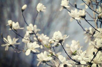 Adesivo Flores da magnólia