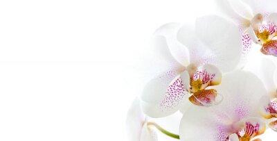 Adesivo flores da orquídea isoladas