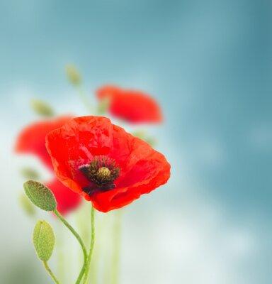 Adesivo Flores da papoila