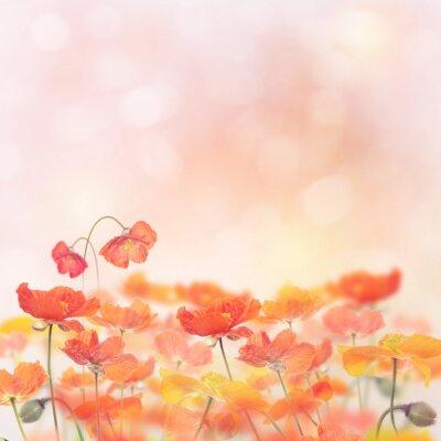 Adesivo Flores da papoila florescem