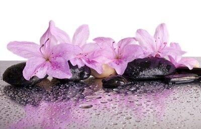 Adesivo flores e pedras pretas com reflexão