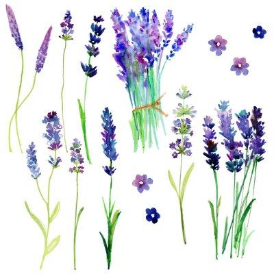 Adesivo Flores isoladas da lavanda de Provence. Conjunto floral da aguarela para seu projeto.