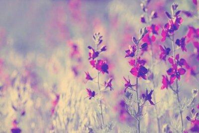 Adesivo flores selvagens roxas