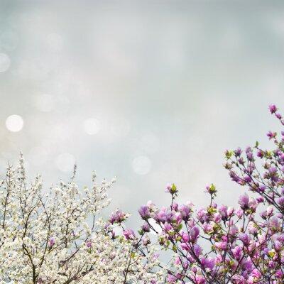 Adesivo Florescendo, magnólia, árvore
