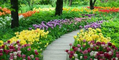 Adesivo Florescendo tulipas no jardim