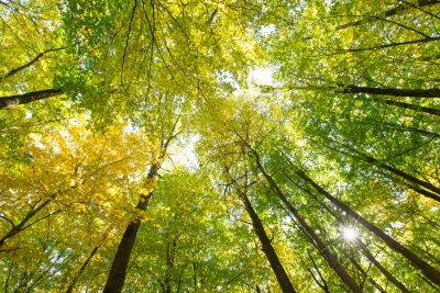 Adesivo floresta