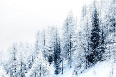 Adesivo Floresta coberta de neve