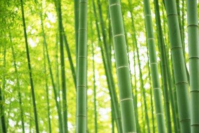 Adesivo floresta de bambu