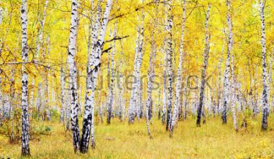 Adesivo floresta de outono vidoeiro
