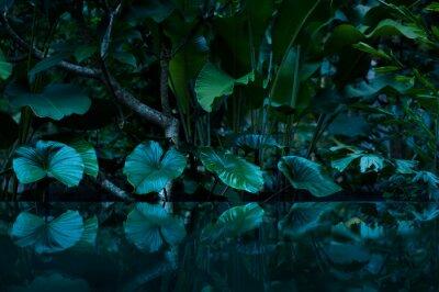 Adesivo Floresta tropical com espelho de água