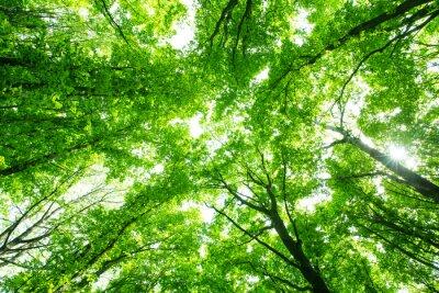 Adesivo Floresta verde bonita