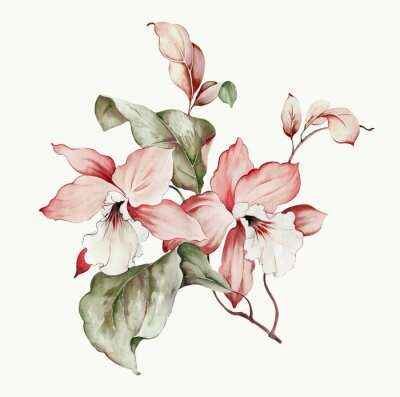 Adesivo Flowers watercolor illustration.Manual composition.Big Set watercolor elements.