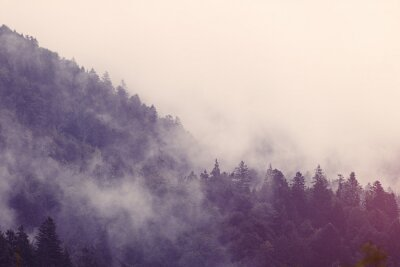 Adesivo Fog in the forest