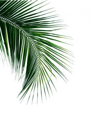 Adesivo folha de palmeira de coco tropical isolada no fundo branco