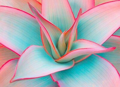 Adesivo folhas de agave em cores pastel da moda para fundos de design