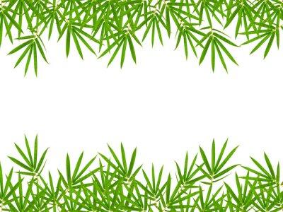 Adesivo folhas de bambu isolado no fundo branco