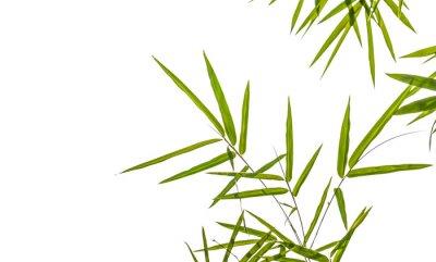 Adesivo folhas de bambu isolado no fundo branco, recorte incluindo caminho