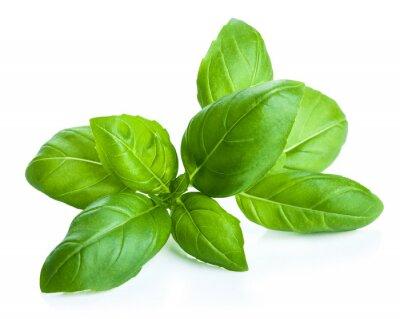Adesivo folhas de manjericão isolado
