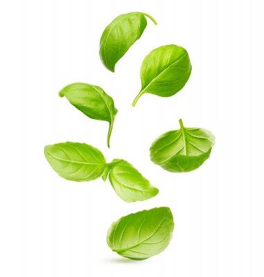 Adesivo Folhas de manjericão tempero closeup