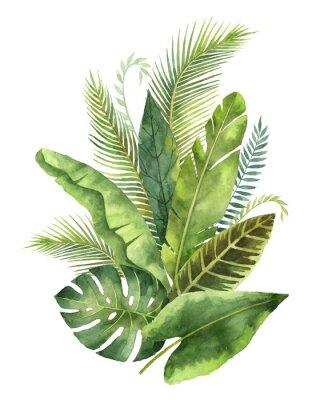 Adesivo Folhas e ramos tropicais do ramalhete da aguarela isolados no fundo branco.