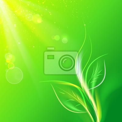 Adesivo Folhas verdes, sol brilhante