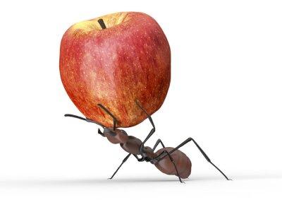 Adesivo Formiga, levantamento, maçã, isolado, branca