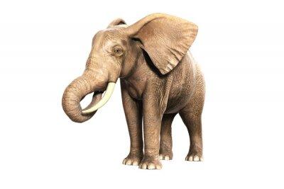 Adesivo Freigestellter Elefante am Fressen (Gerberas Bild)