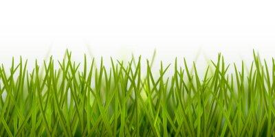 Adesivo Fronteira de grama verde sem costura realista de vetor ou quadro isolado no fundo branco - natureza, ecologia, meio ambiente, modelo de jardinagem
